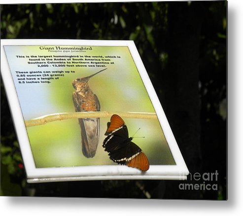Butterfly Metal Print featuring the photograph Outbound Butterfly by Janet Dickinson