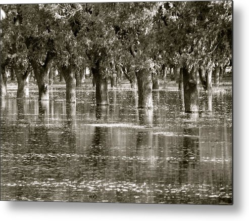 Trees Metal Print featuring the photograph Pecan Trees I by Penny Anast