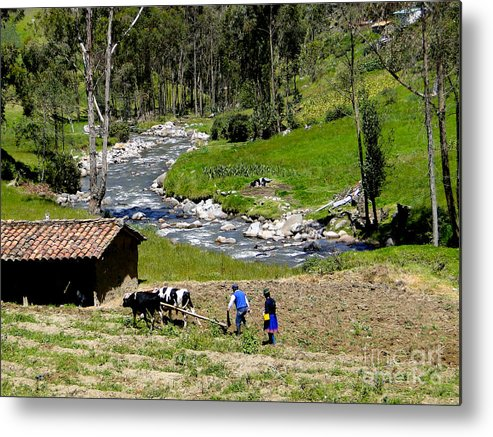 Al Bourassa Metal Print featuring the photograph Ploughing With Oxen In Ecuador II by Al Bourassa
