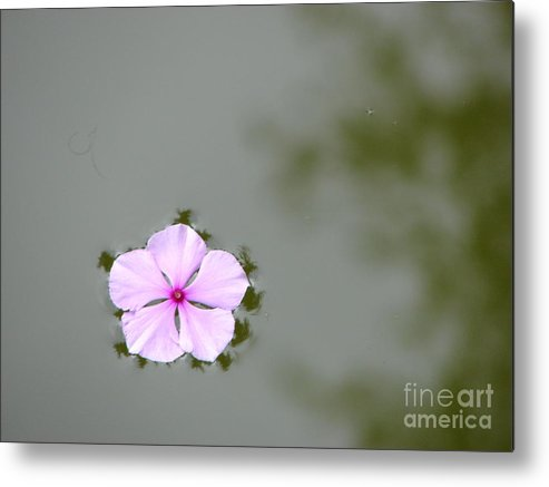 Float Metal Print featuring the photograph Ponder by Priscilla Richardson