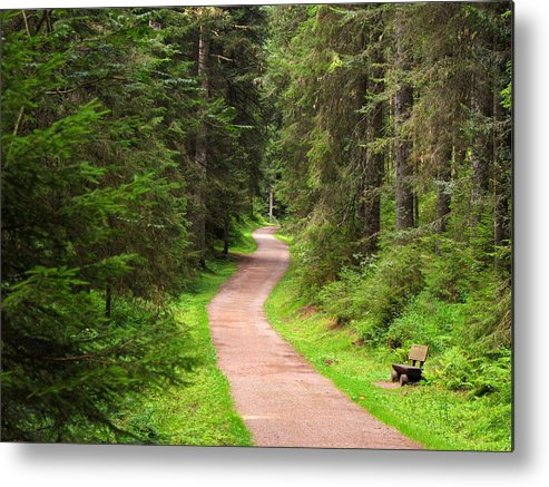 Horizontal Metal Print featuring the photograph Recreation In Forest by Ursula Sander