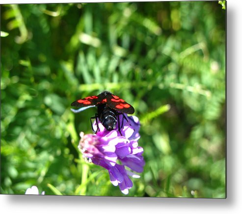 Insect Metal Print featuring the photograph Red Fly by Andonis Katanos