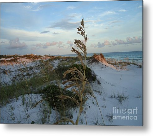 Photography.landscape Grayton Beach Metal Print featuring the photograph Sea Oat by April Murray