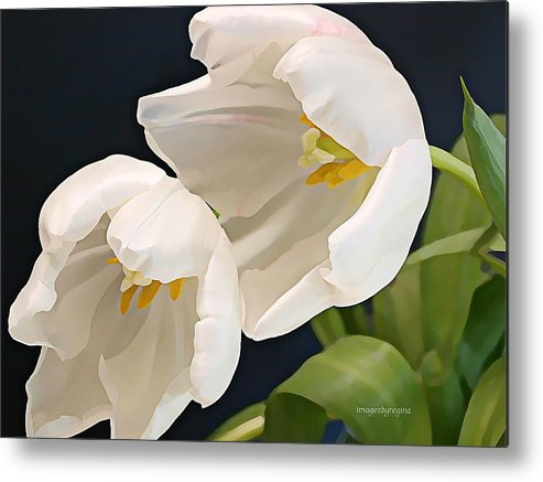 Tulips Metal Print featuring the photograph Sisters In White by Regina Arnold