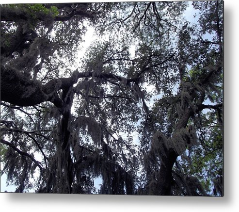 Landscape Metal Print featuring the photograph Southern Sky by Jennifer Stockman