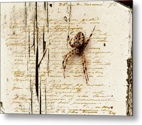 Spider Metal Print featuring the photograph Spider Letter by Yvon van der Wijk