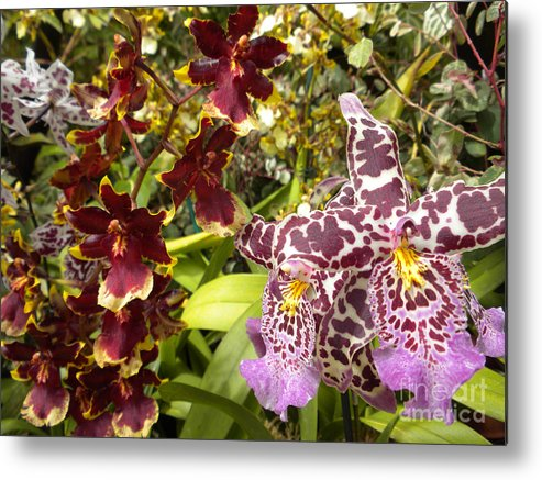 Nature Metal Print featuring the photograph Spotted Flowers by Silvie Kendall
