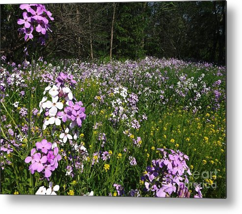 Meadow Metal Print featuring the photograph Spring Meadow by Gerald Strine