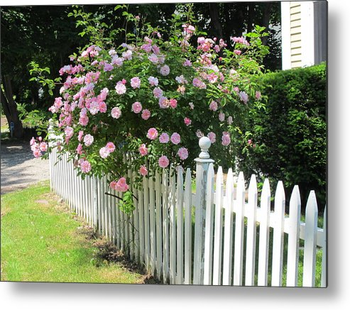 Rose Metal Print featuring the photograph Summer In Maine by Mary Ellen Mueller Legault