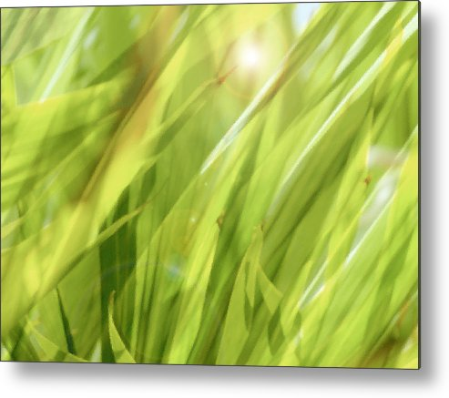 Green Metal Print featuring the photograph Summertime Green by Ann Powell