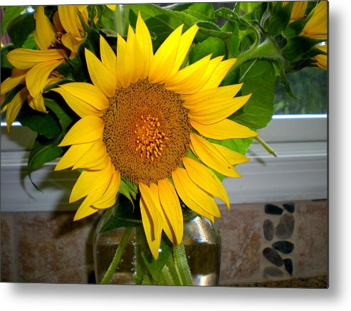 Sunflowers Canvas Sunflowers Art Prints Sunflower Decorative Framed Prints Metal Print featuring the photograph Sunny In Md 4 by Danielle Parent