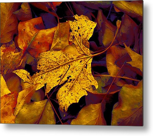Sycamore Stands Out Metal Print featuring the photograph Sycamore Stands Out by Beth Akerman