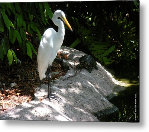 Turtle Metal Print featuring the photograph The Tortoise And The Heron by Maria Bonnier-Perez