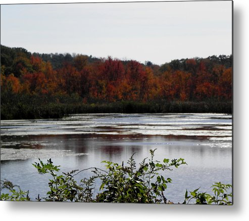 Autumn Metal Print featuring the photograph the trees are on FIRE by Kim Galluzzo Wozniak