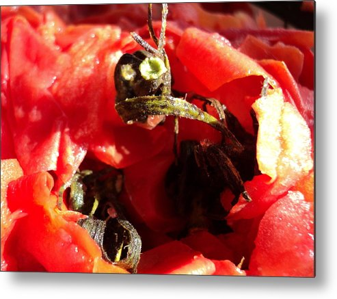 Tomatoes Metal Print featuring the photograph Tomato Creature by Janice Robertson