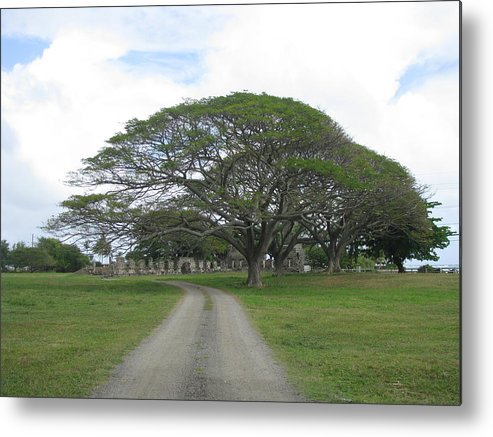 Tree Metal Print featuring the photograph Tree Over Ruins by Anthony Trillo