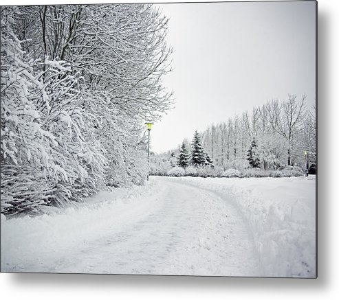 Horizontal Metal Print featuring the photograph Trees And Dirt Path In Snowy Landscape by K.Magnusson