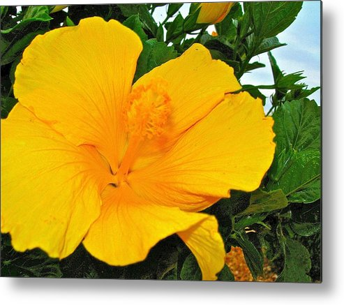 Flowers Metal Print featuring the photograph Tropical Delight by Randy Rosenberger