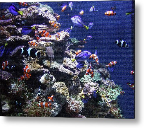 Fish Metal Print featuring the photograph Under The Sea by Karey and David Photography