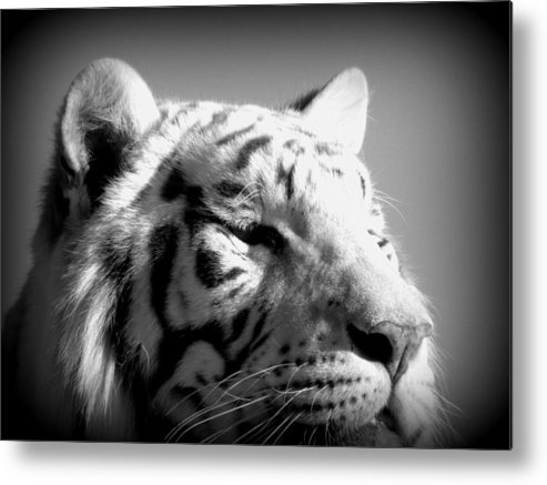 Black Metal Print featuring the photograph Up Close by Kim Galluzzo Wozniak