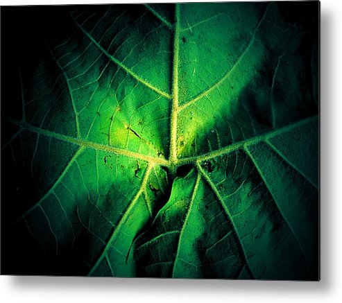 Veins Of A Sycamore Leaf Metal Print featuring the photograph Veins Of A Sycamore Leaf by Beth Akerman