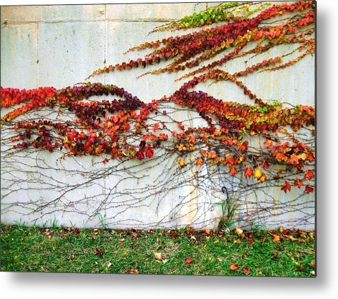 Wall Of Fall Colors Metal Print featuring the photograph Wall Of Fall by Todd Sherlock