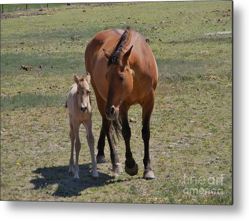 Mother Metal Print featuring the photograph Watchful Mother by Woody Wilson