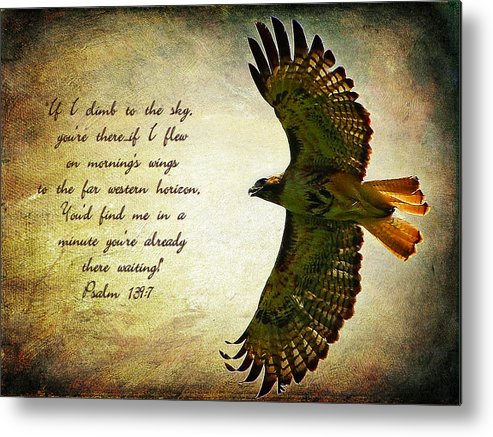 Poster Metal Print featuring the photograph Where Eagles Soar by Blair Wainman