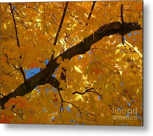 Maine Metal Print featuring the photograph Yellow Maple Branch by Christine Stack