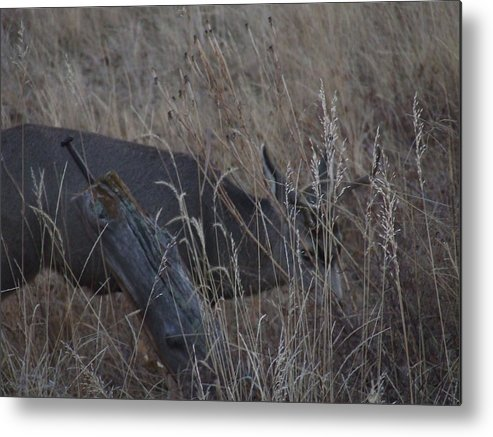 Wildlife Metal Print featuring the photograph  I See You by Dennis Wilkins