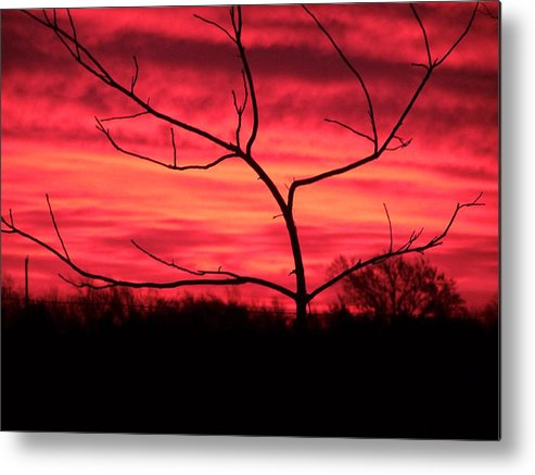 Sunset Metal Print featuring the photograph Good Evening by Evelyn Patrick