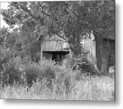 Country Metal Print featuring the photograph Hidden by Rhonda Barrett