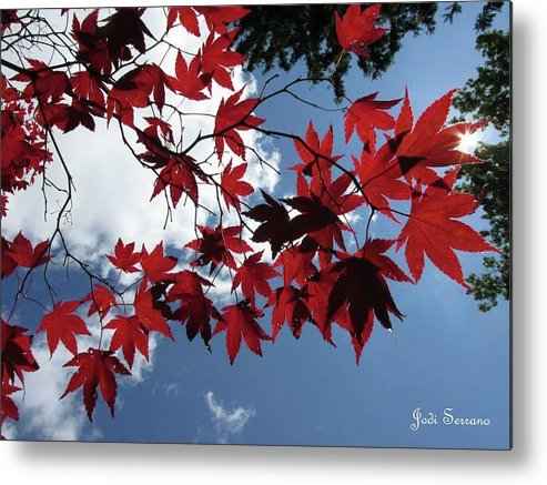 Blue Metal Print featuring the photograph Looking Up by Jodi Serrano