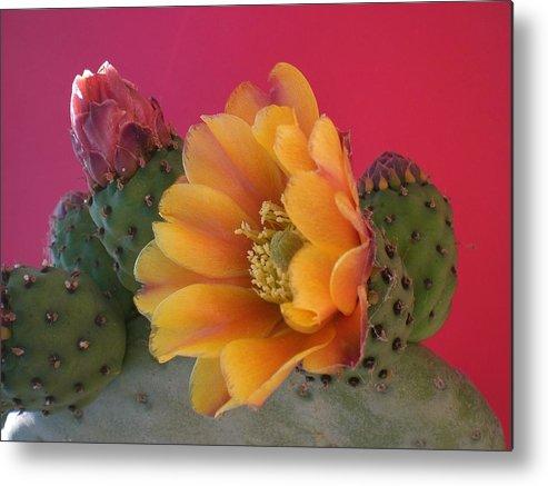 Cactus Metal Print featuring the photograph Orange Cactus Blossom by Aleksandra Buha