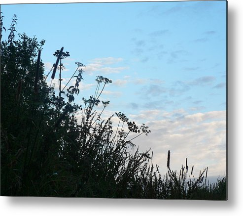 Hedgerow Metal Print featuring the photograph Summer Hedgerow by Lynne Iddon