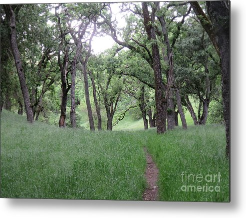 Landscape Metal Print featuring the photograph Through The Meadow by Suzanne Leonard