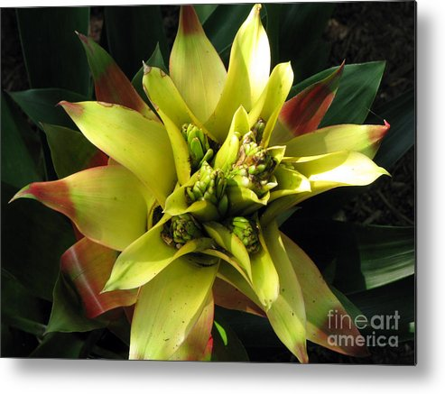 Tropical Metal Print featuring the photograph Tropical by Amanda Barcon