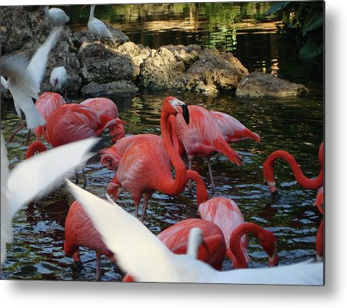 Nature Metal Print featuring the photograph Tropical Sanctuary by Sonya Ki Tomlinson