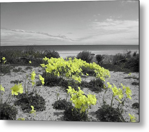 Flowers Metal Print featuring the photograph Yellow by Douglas Barnard
