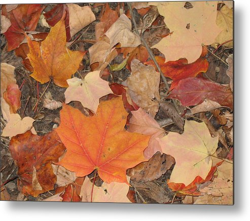 Nature Metal Print featuring the photograph Autumn Leaves by Ralph Baginski