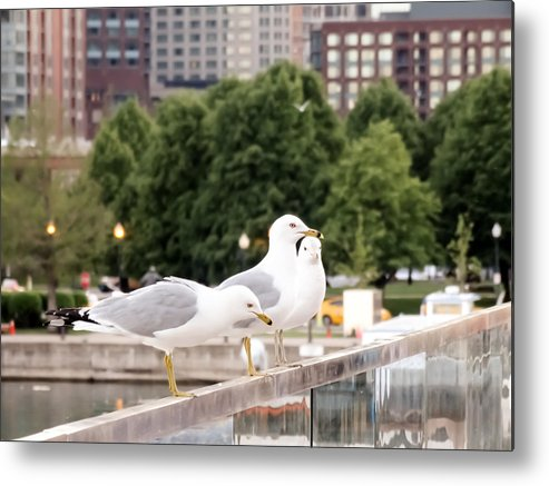 3 Seagulls In A Row Metal Print featuring the photograph 3 Seagulls In A Row by Cynthia Woods