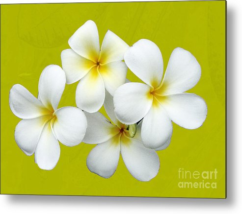 Flower Metal Print featuring the photograph Tropical Frangrapani by Karen Lewis