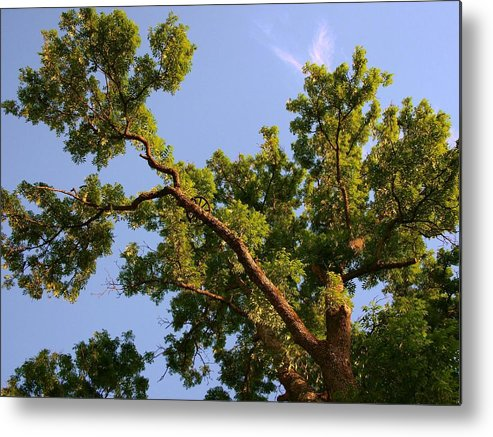 Photography Forest Scene Metal Print featuring the digital art 3256 Photography Forest Scene by Rose Lynn