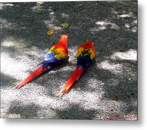 Bird Metal Print featuring the photograph A Pair Of Parrots by Elise Samuelson