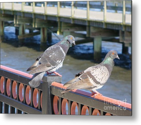 Bird Metal Print featuring the photograph A Pair by Stephanie Richards