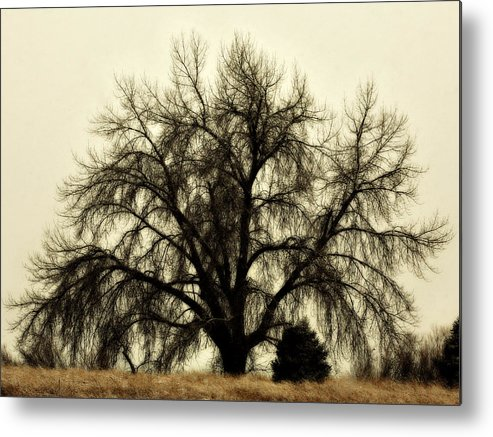 Tree Metal Print featuring the photograph A Winter's Day by Marilyn Hunt