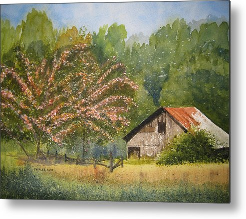 Mimosa Trees Metal Print featuring the painting Abandoned Mimosas by Shirley Braithwaite Hunt
