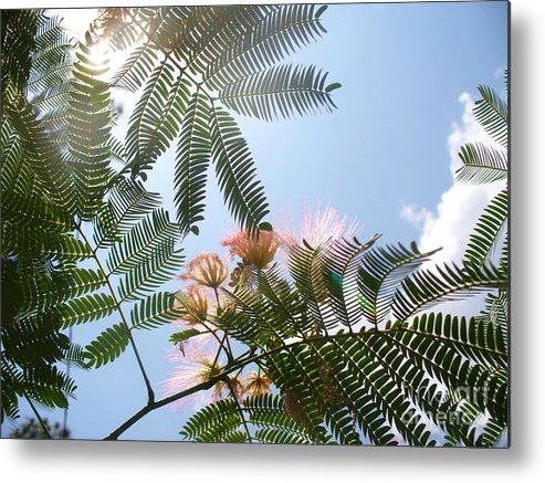 Flower Metal Print featuring the photograph Above by Stephanie Richards