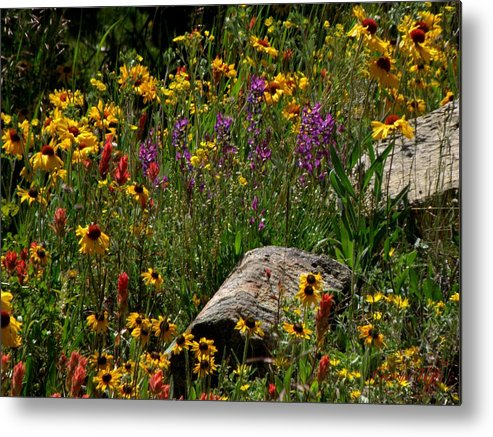 Flowers Wildflowers Colorado Rocky Mountains Meadow Colorful Indian Paintbrush Metal Print featuring the photograph Abundance by George Tuffy