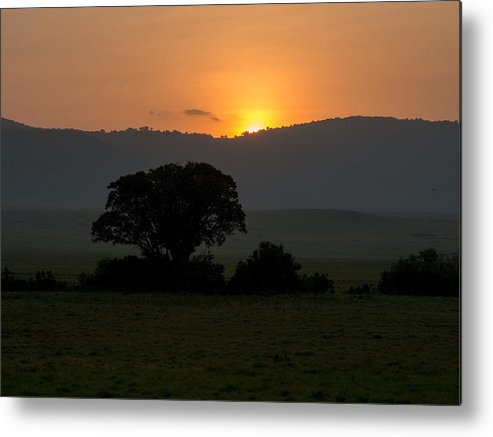 Sunrise Sunset Tree Metal Print featuring the photograph African Sunset by Randy Gebhardt